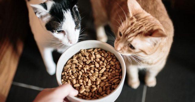 Kedi Maması Gıdaları Hakkında